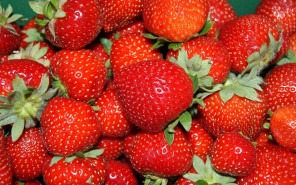 U.K. Hospitality Practices and Minimum Wage Could Make the British Strawberry Unaffordable